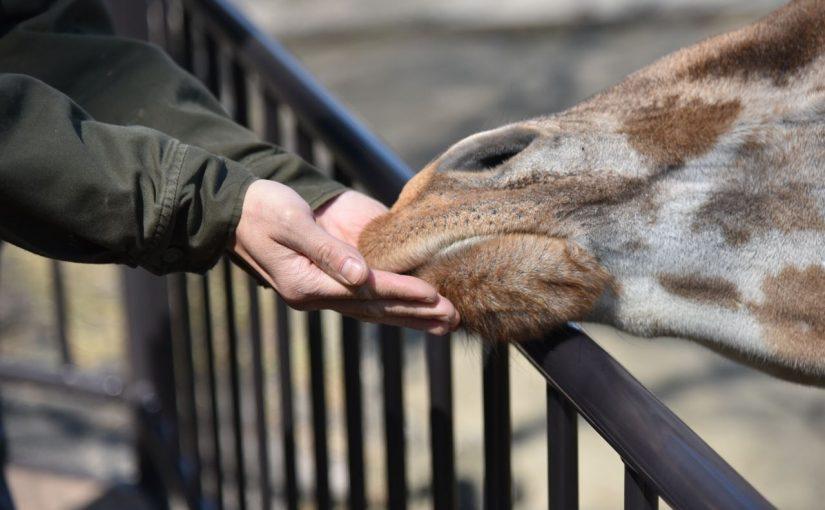 生きる。それは食らうということ #東山動植物園 #東山80 #オジ旅PR